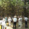 松林の枝の整理