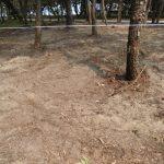 松葉の腐葉土