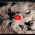 大分県杵築市アカウミガメの孵化の動画part1
