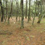 松林の再生