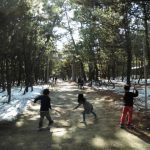 松林の清掃