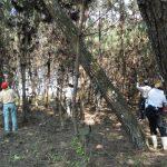 2018年度7月松林整備
