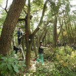 松林整備延期