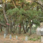 松の樹幹注入