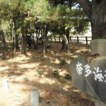 奈多狩宿海岸の松樹幹注入