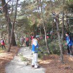 第6回松林の整備