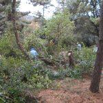 12月第2回松林の整備