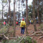 1月松林整備実施