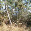 2月松林整備前の状態