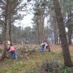 2月松林の整備実施