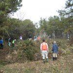 第8回松林整備実施