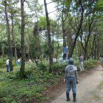 第1回松林の整備