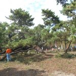 第2回松林整備