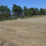 幼木の下草刈り