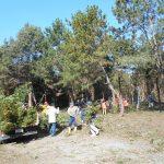 第5回松林整備