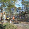 1月松林整備