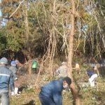 第7回松林整備