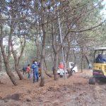 第8回松林整備